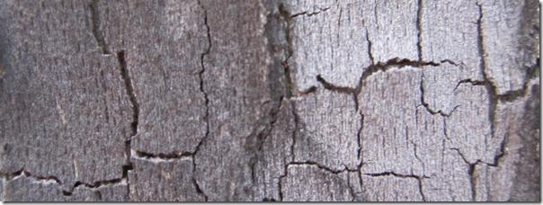 Peeling Bark Texture